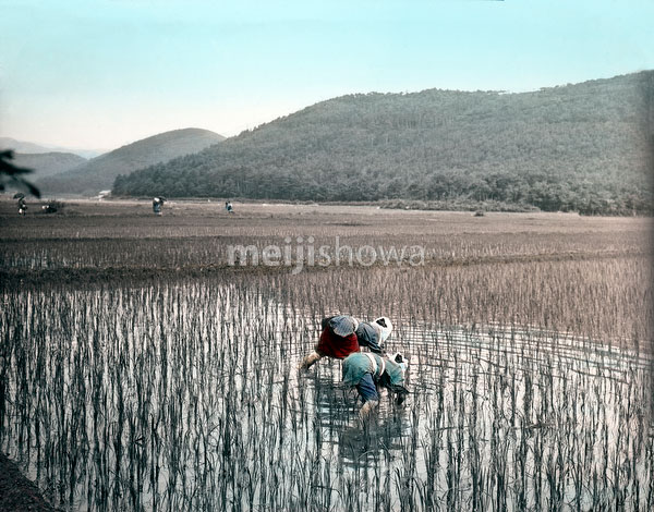 110613-0006 - Rice Field
