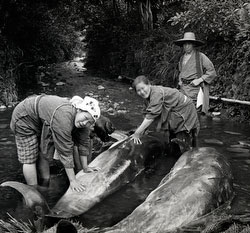110613-0036 - Dolphin Catch