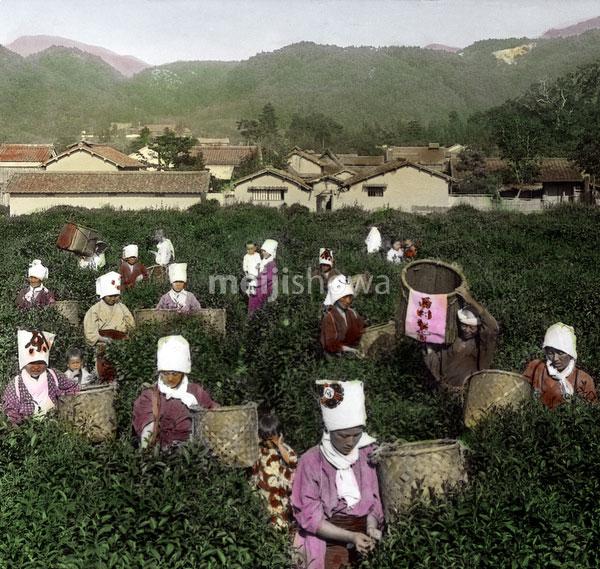 110827-0014 - Tea Pickers