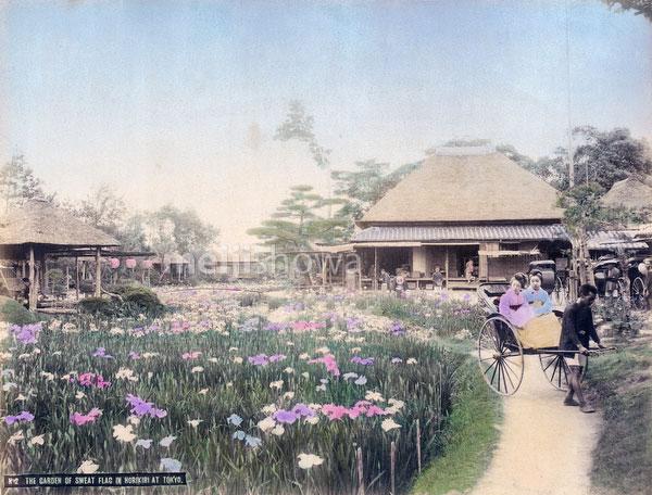 111003-0022 - Iris Flowers at Horikiri
