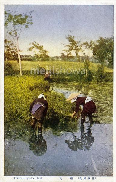 110705-0012 - Harvesting Rice