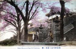 110705-0027 - Nogeyama Cherry Blossom
