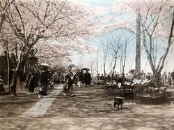 120411-0022 - Ueno Park
