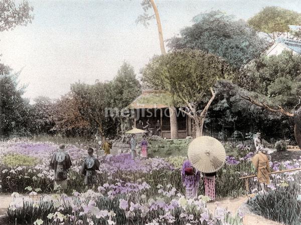 120411-0029 - Iris Flowers at Horikiri