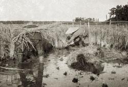 120423-0021 - Farmers Harvesting Rice