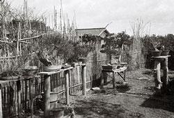 120423-0023 - Rural Garden