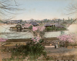 130129-0050 - Shinobazu Pond