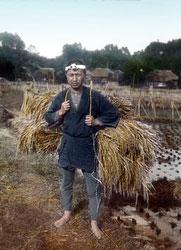 130601-0047 - Harvesting Rice