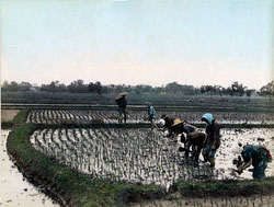 80303-0088-PP - Planting Rice