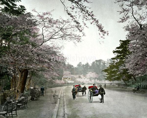 120207-0044-PP - Ueno Park