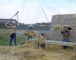 120207-0108-PP -  Threshing Rice