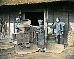 120207-0134-PP - Winnowing Rice