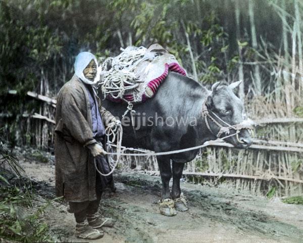120207-0205-PP - Farmer with Ox