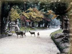 131128-0047 - Nara Park