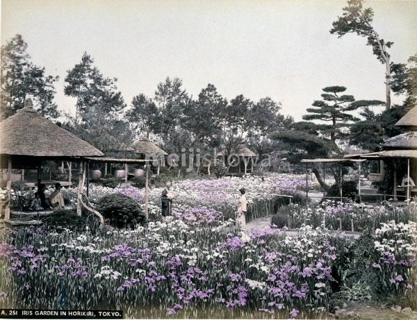 131128-0050 - Iris Flowers at Horikiri
