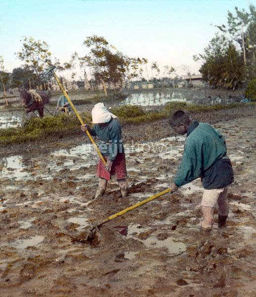 140302-0003 - Plowing a Rice Field