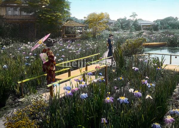 140302-0020 - Iris Flowers at Horikiri
