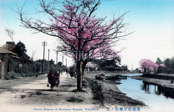 70216-0050 - Horiwari Negishi