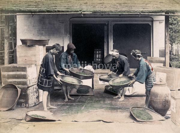 140916-0204-PP - Sorting Tea Leaves