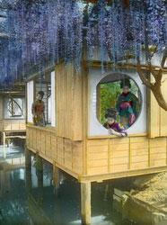 160201-0014 - Japanese Wisteria Garden
