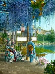 160201-0015 - Japanese Wisteria Garden