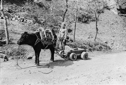 160202-0032 - Small Ox Cart