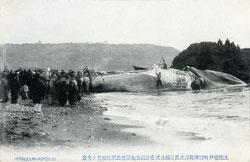 160301-0012 - Flensing a Whale