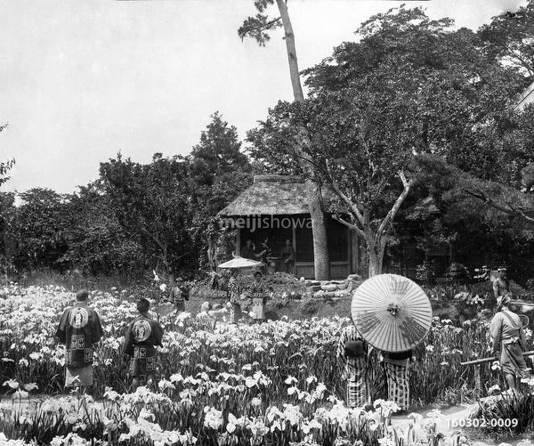 160302-0009 -  Iris Flowers at Horikiri