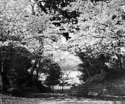 160302-0013 - Ueno Park