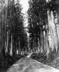 160302-0026 - Nikko Road