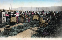 160303-0035 - Tea Pickers