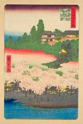 131003-0016-OS - Cherry Blossom