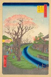 131003-0042-OS - Cherry Blossom in Shinjuku