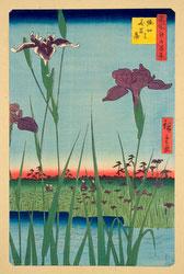 131004-0064-OS - Horikiri Iris Garden