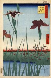 131004-0064.1-OS - Horikiri Iris Garden