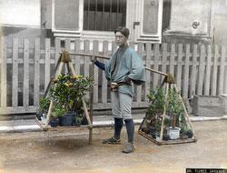 161215-0038 - Gardener with Plants