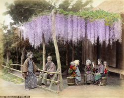 161215-0050 -  Nursemaids under Wisteria