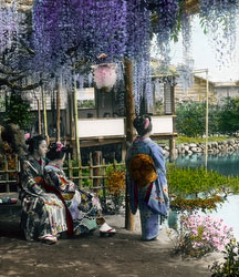 161217-0049 - Japanese Wisteria Garden