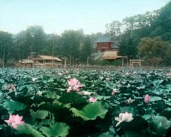 170201-0002 - Lotus Pond