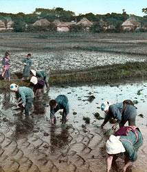 170201-0018 - Planting Rice