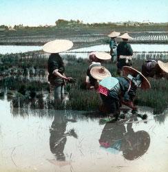 170201-0019 - Transplanting Rice Plants