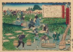 210122-0003-OS - Japanese Kuzu Farmers at Work