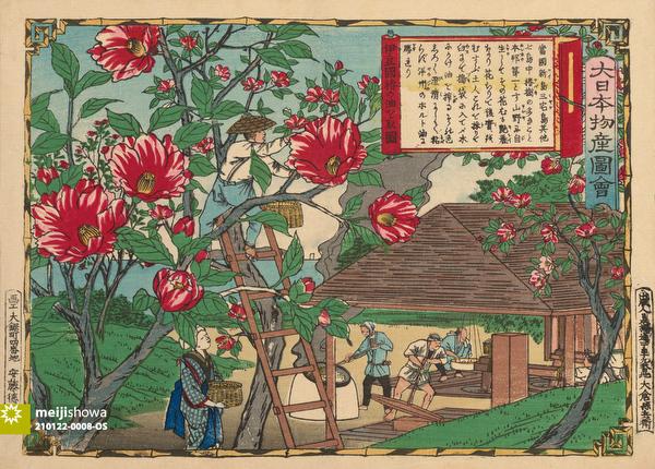210122-0008-OS - Camellia Oil Production