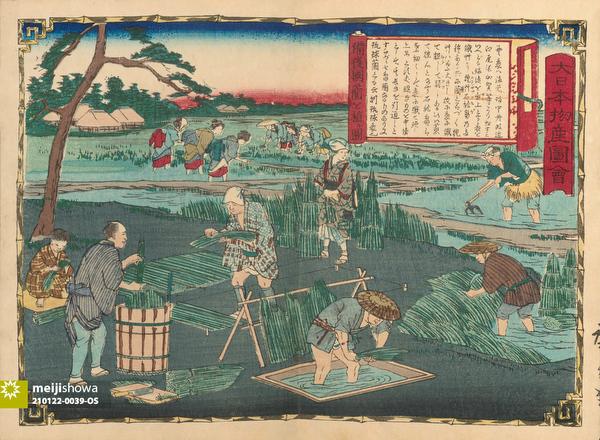 210122-0039-OS - Japanese Rush Farming