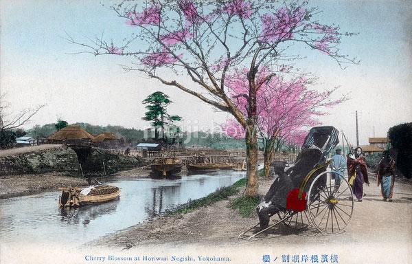 70330-0024 - Horiwari Negishi